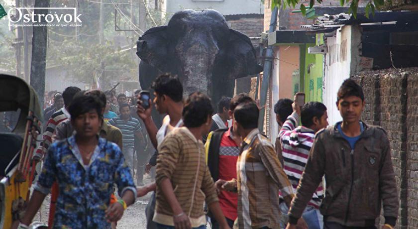 В индийский город забрел слон и повредил дома (ВИДЕО)