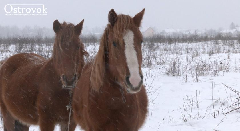 Прикарпатець під час морозів та хуртовини виганяє у поле своїх коней і там без їжі та сіна залишає їх ночувати (ВІДЕО)