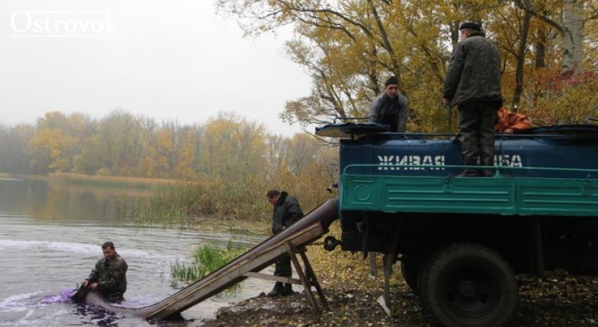 """""""Инициатива снизу"""".Лисичанские рыбаки выпустили в Северский Донец почти двести кг белого амура и карпа, чтобы очистить реку"""